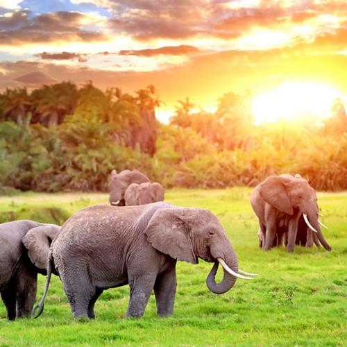 sudafrica-golf-exeprience