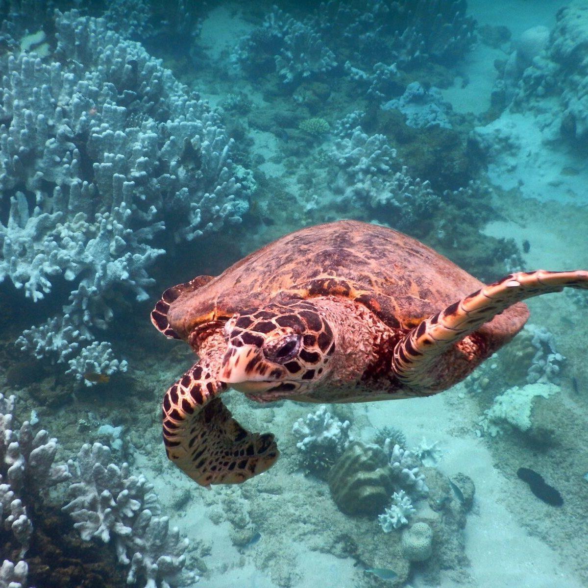Nosy Tanikely - Madagascar - tartaruga